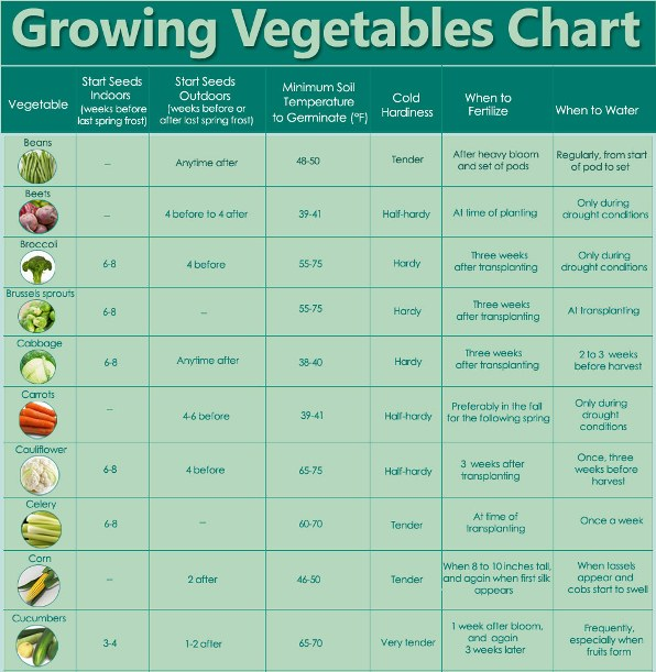 Guidelines For Growing Vegetables Chart