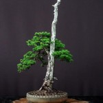 bonsai plants 29