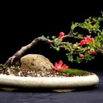 bonsai plants 4