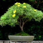 bonsai plants 5