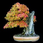 bonsai plants 8