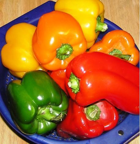 growing peppers in garden 1