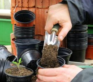 Organic Potting Soil