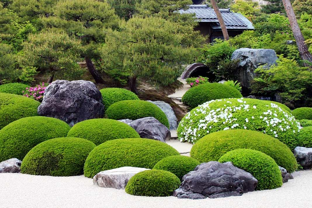 Start from scratch with japanese garden plants gardening for Best plants for japanese garden