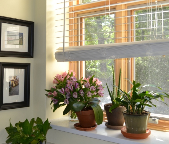 common mistakes in indoor gardening