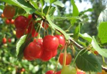 suggestions for general care for fruit gardening
