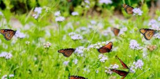 how to go ahead with Butterfly gardening