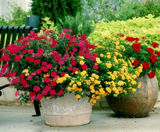 easy to grow flowering plants