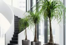 take care of indoor plants when you are away on vacation