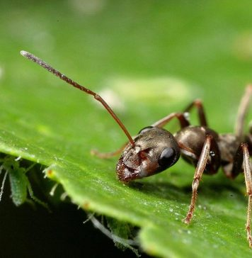 5-Ways-Deal-with-Ants-in-your-Vegetable-Garden