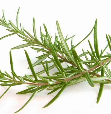 tips for growing rosemary indoors