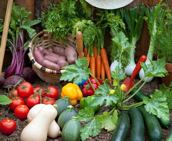 vegetable garden odds-Important tips and measures