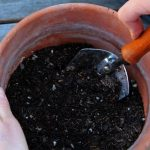 Which is better Garden Soil or Potting Soil