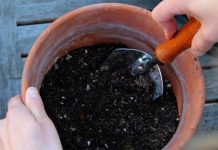 Which-is-better-Garden-Soil-or-Potting-Soil