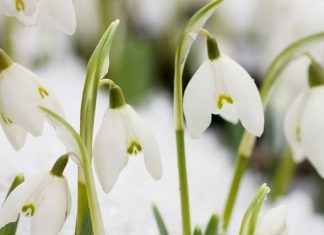 Six plants that are best to grow in winters