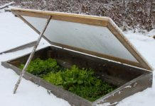 7 Vegetables to Grown in Winter