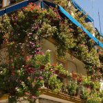 7 gardening tips for apartment dwellers