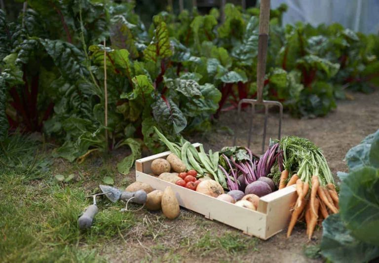 Love Kitchen Garden? Learn To Maintain It!