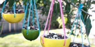 How To Make a Bird Feeder using Oranges?