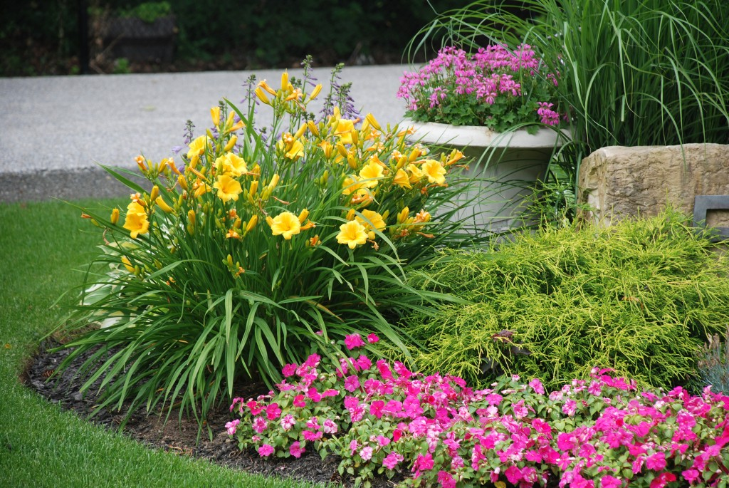 Ways to Keep your Garden Blooming Throughout the Year