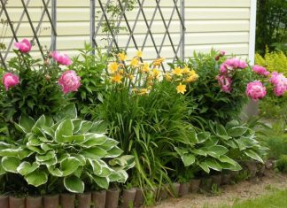 Plants That Stay Intact All Through The Year