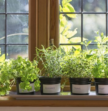 6 Things You Must Know if you Love Indoor Gardening
