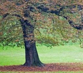 Know How To Safely Transplant An Oak Tree Oak Tree Care