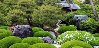 Start from Scratch with Japanese Garden Plants