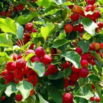 Best Fruit Trees to Grow in a Small Garden - Gardening ...