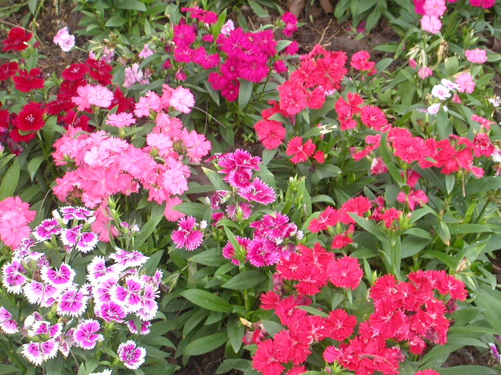 The First Tip To Design A Good Looking And Practical Flower Garden Is Check Climate As Well Soil Type You Must Make List Of All Those