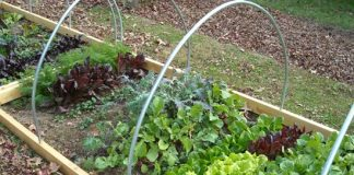 vegetables that need shady space for healthy growth