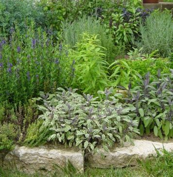 how to take care of your herb garden
