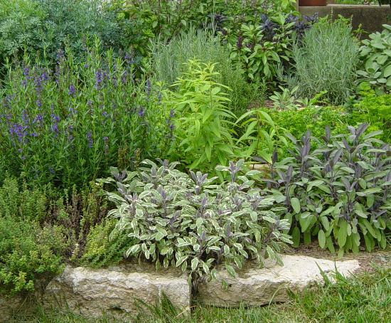 7 Must Have Plants For Your Herb Garden