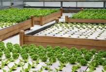 growing vegetables in greenhouse