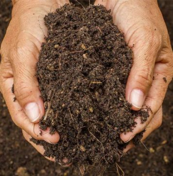 How to Sterilize the Garden Soil