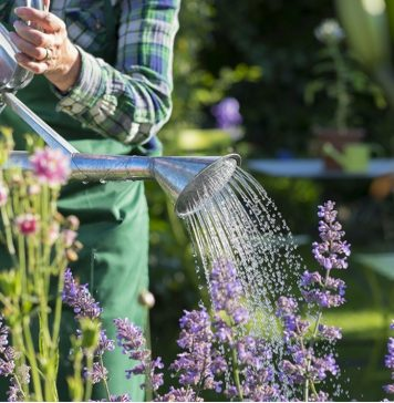 Five things not to do in your garden during a heat wave