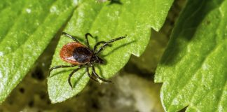 6 Natural ways to Ward Off Ticks from your Garden