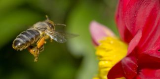 5 Ways to Attract Bees to Your Garden
