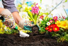 How to Choose the Perfect Soil for Your Plant