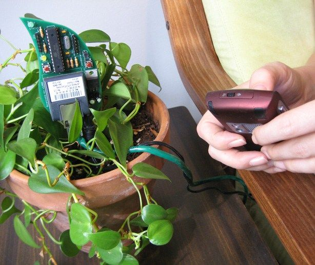 Top 5 Gadgets to Know Your Plant's Needs